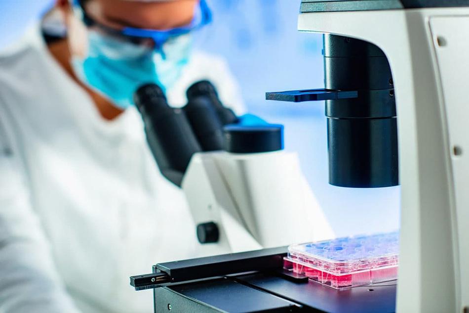 исследования стволовых клеток