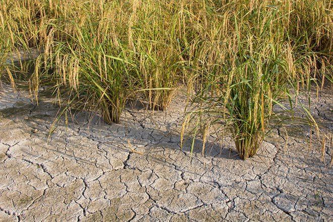 Засуха на Кубе 23 декабря 2015