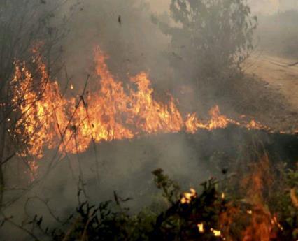 Пожары в Индонезии 10 марта 2016