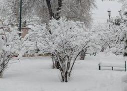 Снегопад в Мексике 30 декабря 2015