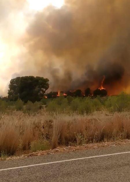 Лесные пожары на юге Испании