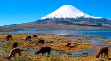 Землетрясения в Чили 24 июля 2015