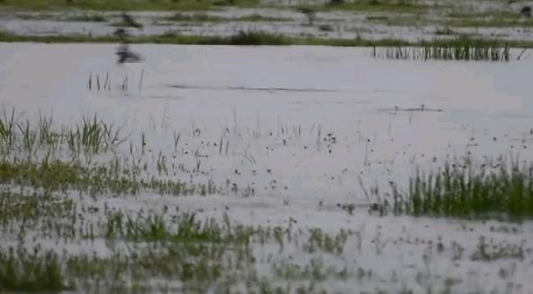 Наводнение в Индии 23 сентября 2015