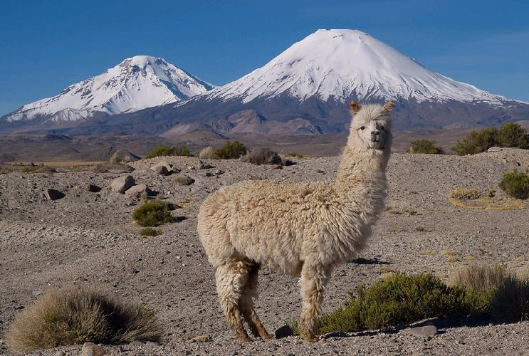 Землетрясения в Чили 22 сентября 2015