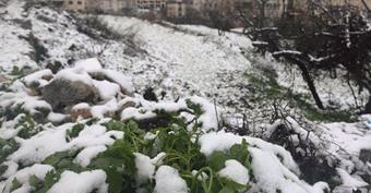 Снегопад в Палестине 25 января 2016