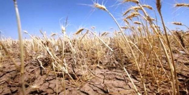 Засуха в Эфиопии 19 января 2016