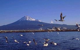 Серия землетрясений в Японии 06 августа 2015