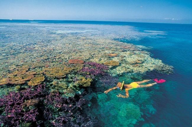 Обесцвечивание рифов в Австралии 01 апреля 2016