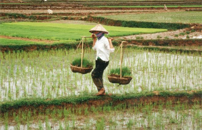 Засуха во Вьетнаме 17 марта 2016