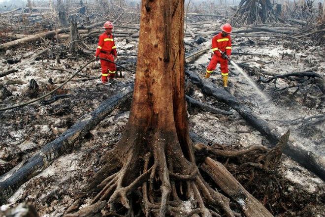 Пожары в Индонезии 01 ноября 2015